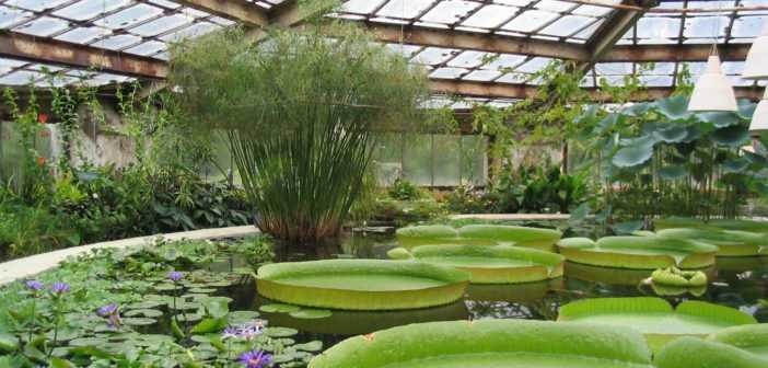 Ботанический сад самый большой сад в России