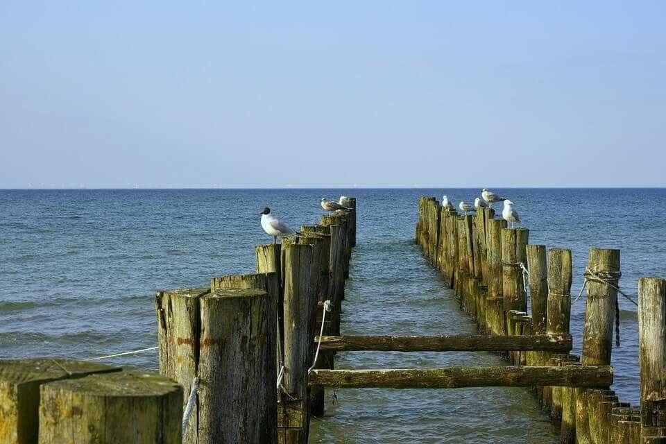 Дикие места финского залива